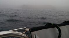 Les Poulains de Belle-Ile trottinent dans la brume