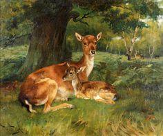 Fallow Deer, Wright Barker
