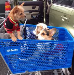 Shopping at PetSmart is more fun with friends! #inspiredbypets (IG pic @kelleygrrrl)