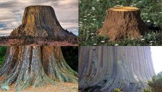 Ancient mountain Trees of the World | Flat Earth Supporter Claims Mountains are the Ancient Remains of ...