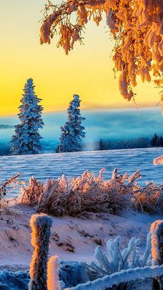 Wallpaper 3840×2160 winter tree 4K  | Beautiful Winter Sunrise 4K Ultra HD wallpaper | 4k-Wallpaper.Net