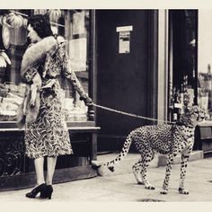 Vintage b/w photo ❤️from the 30s 'Phyllis Gordon taking her pet cheetah shopping in London' #art#styleupyourhome#styleupyourlife#karageorgioushowroom#soldout