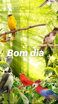 Good Morning, Bird, Animals, Videos, Cute Good Morning Messages, Good Morning Wishes, Bonito, Beautiful Flowers, Photo Galleries