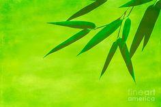 bamboo - leaves - green - spa