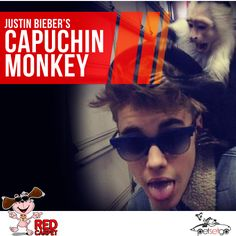 Don't Monkey Around Justin.  For those fans of Justin Bieber, #DidYouKnow, the star has a pet capuchin monkey, Mally. The singer was gifted the tiny mammal by a record producer. The two were inseparable until Mally was confiscated by customs authorities in Munich, Germany.