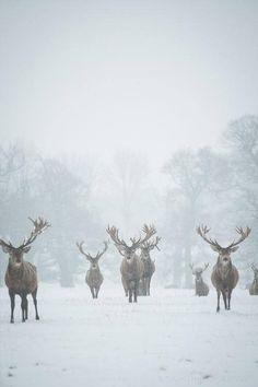 Zoals ik ze ooit in een droom zag, maar dan Zonder sneeuw en met hun kontjes naar me toe