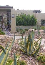 Desert Landscape And Hardscape In Az Succulents