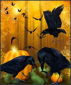 Raven and Crow tubes