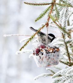 fågelmat