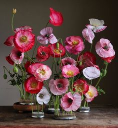 Uploaded by ℓυηα мι αηgєℓ ♡. Find images and videos on We Heart It - the app to get lost in what you love. Beautiful Flower Arrangements, My Flower, Flower Art, Floral Arrangements, Beautiful Flowers, Deco Floral, Arte Floral, Pink Poppies, Spring Flowers