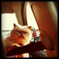 Everyone's favorite weirdo, Winston. He disapproves.