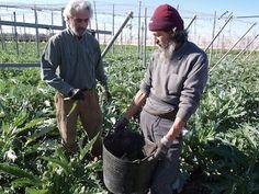 Uno de cada cinco contratados andaluces trabaja en la industria agraria