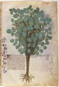 Historia Plantarum (On plants) is a natural science encyclopedia, in which animals, plants, and minerals are illustrated and described for their medicinal properties, in keeping with the medieval tradition of the tacuina medievali (medieval health handbooks), and from which the codex derives its most common name, Tacuinum sanitatis.