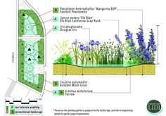 LIDI developed a series of bioretention plant palettes for a variety of applications.