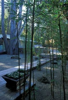 These wood walkway ideas may be exactly what you need to get your plans going in redoing your outdoor area. Either the wood walkway leads to the. Bamboo Landscape, Landscape Elements, Bamboo Garden, Contemporary Landscape, Landscape Design, Landscape Architecture, Modern Backyard, Modern Landscaping, Garden Landscaping