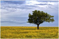 https://flic.kr/p/oWk4hH   The Lonely Tree   Found in west Edmond, Oklahoma.