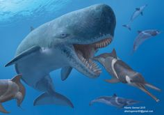 Leviathan (Livyatan melvillei) is an extinct whale that weighed about about 25 tons. It preyed upon prehistoric sharks, seals, dolphins and other whales. Prehistoric Wildlife, Prehistoric World, Prehistoric Creatures, Megalodon, Whale Species, Jurassic World Dinosaurs, Dinosaur Art, Dinosaur Life, Underwater Creatures