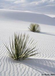 white desert sand...