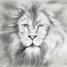 I must say, I'm having so much fun drawing with pencils. Wow. 🔸 A little about me and LIONS 🦁🦁🦁. All my life I've had a love-hate relationship with big cats, especially lions. I used to have reoccurring n