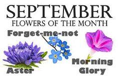38 Trendy Ideas For Aster Flower Tattoo Birth Month Aster Tattoo, Aster Flower Tattoos, Flower Neck Tattoo, Birth Flower Tattoos, Tattoo Flowers, September Birth Flower, September Flowers, Birth Month Flowers, Morning Glory Tattoo
