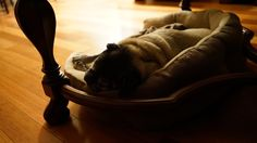 Snooze'n Pugs, Bean Bag Chair, Animals, Furniture, Home Decor, Animales, Decoration Home, Animaux, Room Decor