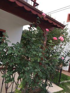 Benim bahçem ❣️ Bodrum