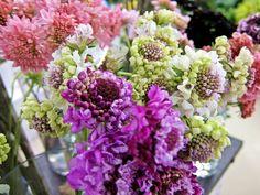 佐賀県エナガファームさんの【スカビオサ】 茎がしっかりしていて花形も大きくて素敵です❢