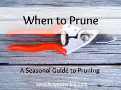 When to Prune with Sensible Gardening