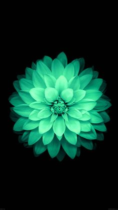 ↑↑TAP AND GET THE FREE APP! Nature Flowers Mint Beautiful Dark Amazing Girly Stylish Black HD iPhone 6 Wallpaper