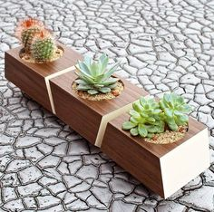 Discover this modern indoor planter made from solid Walnut and featuring Bone White accents. Nest the three planters together along a window sill or as a table top center-piece for a stunning display. Cedar Planters, Modern Planters, Planter Boxes, Indoor Cactus Plants, Indoor Planters, Indoor Gardening, Easiest Flowers To Grow, Wooden Flowers, Flower Boxes