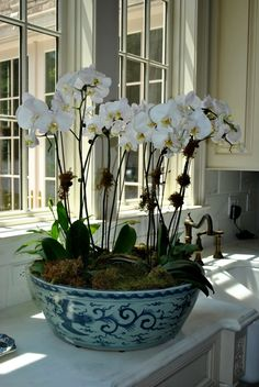 cultivar las orquídeas Orchids in blue porcelain. May do this with the large antique Willow-print bowl I have.Orchids in blue porcelain. May do this with the large antique Willow-print bowl I have. Orchid Centerpieces, Orchid Arrangements, Enchanted Home, Orchid Plants, Orchids Garden, Orchid Pot, Blue And White China, White Orchids, Container Plants