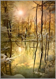 ~~Survive ~ forest and still water reflection, winter, Ried, Alsace, France by Jean-Michel Priaux~~