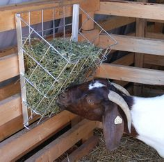 Metal Hay Basket for Goats Item # 38609 Mini Goats, Baby Goats, Cabras Boer, Goat Hay Feeder, Goat Playground, Goat Shed, Miniature Cattle, Goat Shelter, Goat House