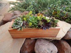 Organic Succulent Plant Centerpiece Decor, Housewarming, Birthday, Anniversary, Sympathy. $33.00, via Etsy.