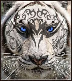 White tiger by MrsTodd on DeviantArt Beautiful Wolves, Animals Beautiful, Cute Animals, Wild Animals, Baby Animals, Big Cats Art, Cat Art, White Tiger Tattoo, Tiger Artwork