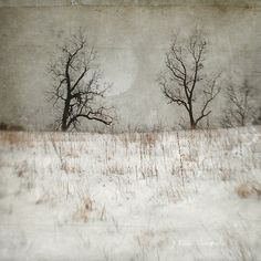 When the Road Darkens jamie heiden Photo Texture, Texture Art, Texture Photography, Fine Art Photography, Abstract Landscape, Landscape Paintings, Encaustic Art, Winter Art, Tree Art