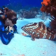 Fish likes the girl ♥ ️ - Katzenliebhaber - Adorable Animals Nature Animals, Animals And Pets, Baby Animals, Funny Animals, Cute Animals, Wildlife Nature, Beautiful Sea Creatures, Animals Beautiful, Amor Animal