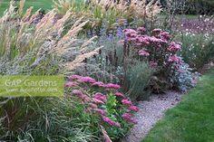 sedum matrona with sedum brilliant, stipa calamagrostis