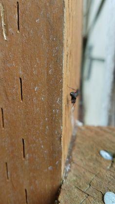 Die besten 25 ant removal ideen auf pinterest ameisen im haus ameisen loswerden und - Ameisen garten loswerden ...