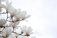 white petals in the sky ~