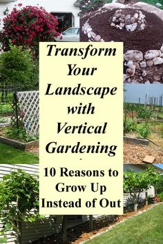 Transform Your Landscape with Vertical Gardening - 10 Reasons to Garden Up Instead of Out to improve your home landscape, make your garden healthier and more productive and create visual interest.