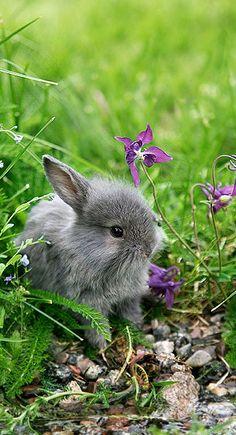 spring baby....