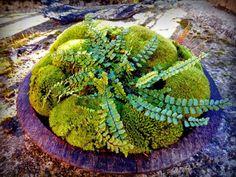 kokedama & co.: #Moss and fern Citola di muschio