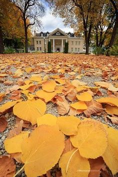 Daly Mansion in Hamilton sheds the last of its fall colors. Photo via Jason Savage Photography.