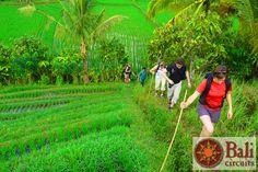 #Indonesia #Bali #Travel #Hike #Nature #Ricefields #Green