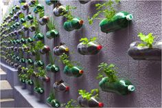 Plant / Herb Wall made from recycled bottles #homedesign #gardening