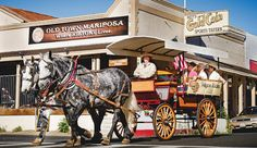 Find a huge gold nugget, the largest alpaca farm in the state, and an olive oil tasting room on your visit to the charming historic county of Mariposa.