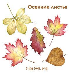 Играем до школы: Осенние листья для оформления