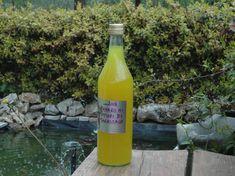 Amaro delicato ai fiori di tarassaco – Vegan blog – Ricette Vegan – Vegane – Cruelty Free