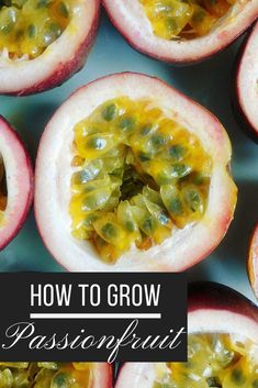 Passionfruit are one of the most bountiful backyard crops, and spring is a good time to get started with planting a new vine or to give one that's already growing a helping hand. Here's how to grow passionfruit! Bucket Gardening, Vegetable Gardening, Passion Fruit Plant, Vine Fruit, Tree Stump Planter, New Vines, Tropical Fruits, Small Gardens, Planting